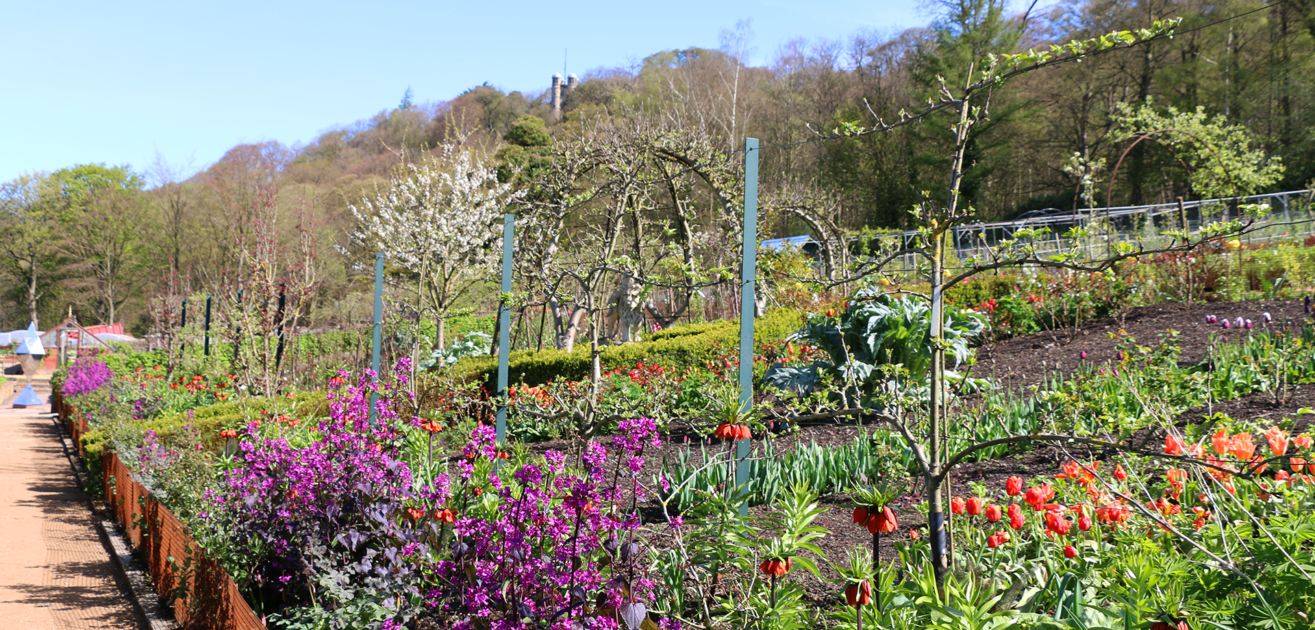 The Kitchen Garden Blog April