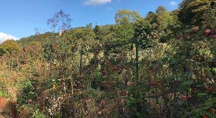 The Kitchen Garden Blog: October