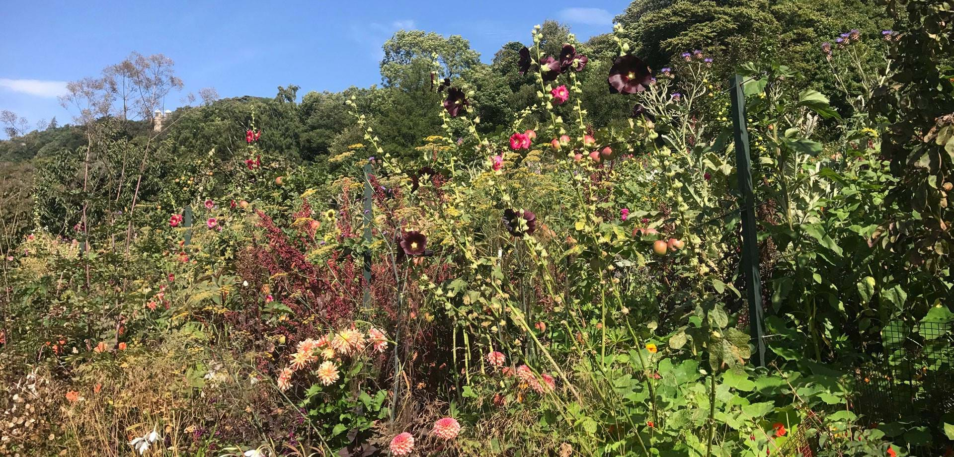The Kitchen Garden Blog: August and September