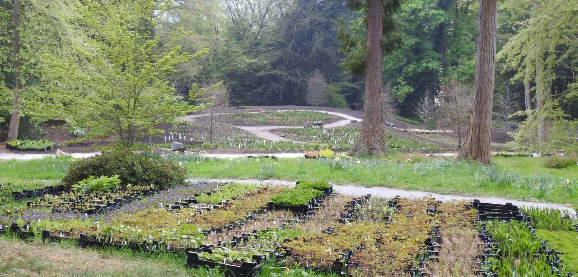 In the Chatsworth Garden: The wet glade